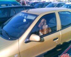 Pies w Xanti